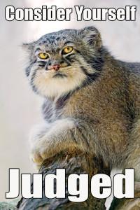 Judging Cat is Judging You